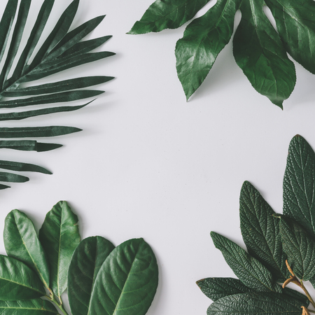 크리 에이 티브 최소한의 배열 밝은 흰색 배경에 나뭇잎. 평평한 평신도. 자연 개념입니다.