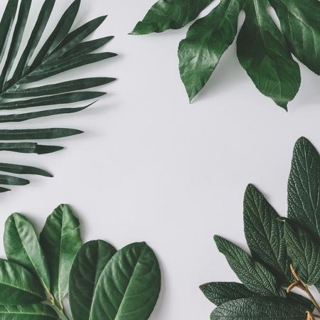 Arreglo mínimo creativo de hojas en fondo blanco brillante. Lecho plano. Concepto de la naturaleza.
