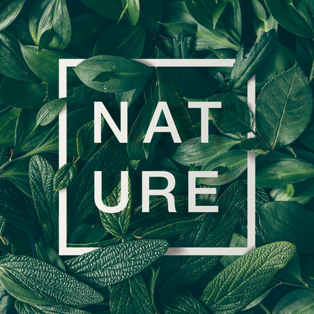 Creative layout made of green leaves with paper card border and word nature. Flat lay. Nature concept