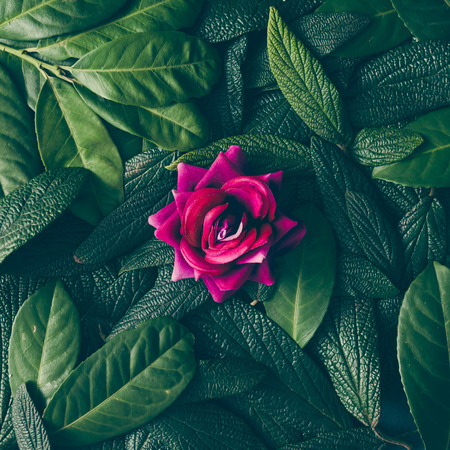 Sáng tạo bố trí được làm bằng lá màu xanh lá cây và hoa màu tím. Phẳng lay. Khái niệm thiên nhiên
