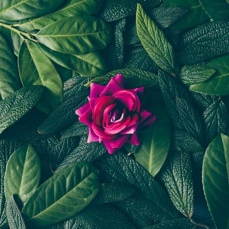 Yeşil yaprakları ve mor çiçeği oluşturan yaratıcı düzen. Düz yatıyordu. Doğa konsepti