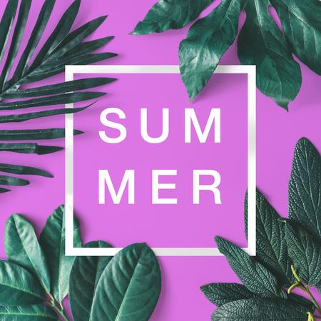 Arreglo minimalista creativo de hojas en fondo blanco brillante con el marco rosado. Lecho plano. Concepto de la naturaleza. Foto de archivo