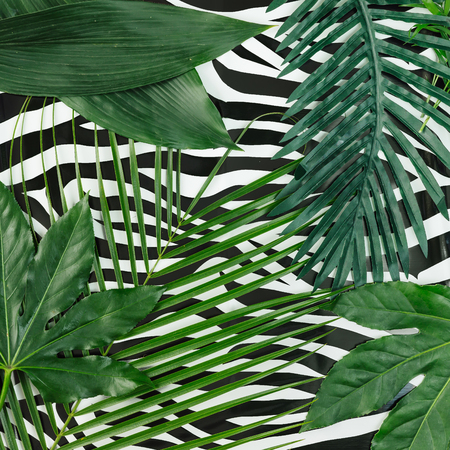 Tropical leaves on zebra texture background. Minimal nature concept. Flat lay.