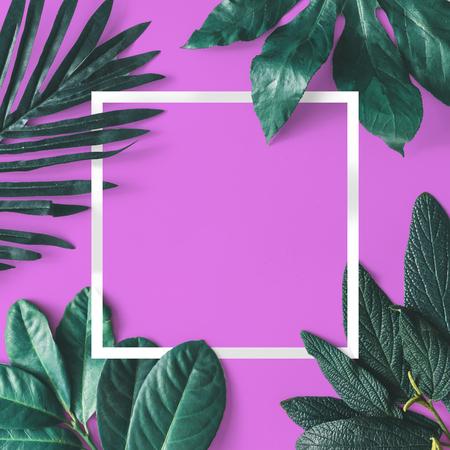 Creatieve minimale opstelling van bladeren op roze achtergrond met wit frame. Vlak liggen. Natuur concept.
