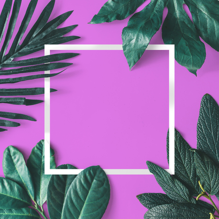 Creative minimal arrangement of leaves on pink background with white frame. Flat lay. Nature concept.