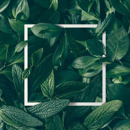 mise en page créative faite de fleurs et des feuilles avec une carte papier note. à plat. concept de Nature Banque d'images