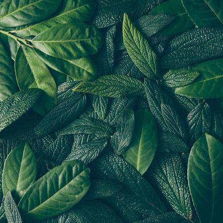 創造的なレイアウトは、緑の葉から成っています。フラットが横たわっていた。性質の概念