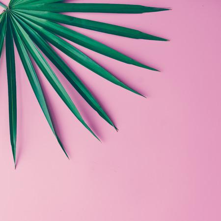 Foglie tropicali su sfondo rosa pastello. Concetto minimo. Piatta piano. Archivio Fotografico - 74236953