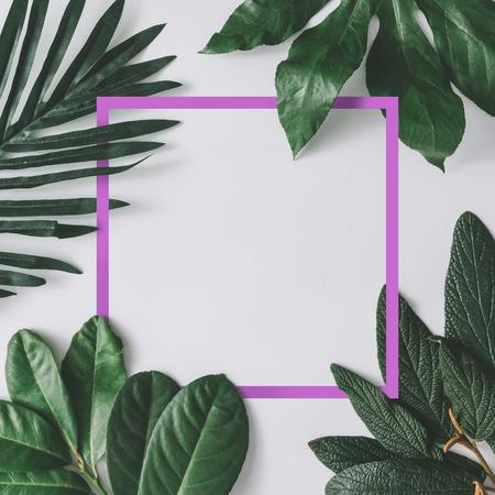 Creatieve minimale regeling van bladeren op heldere witte achtergrond met roze frame. Plat leggen. Natuur concept.