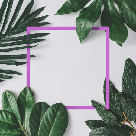 Creative minimal arrangement of leaves on bright white background with pink frame. Flat lay. Nature concept. Banco de Imagens