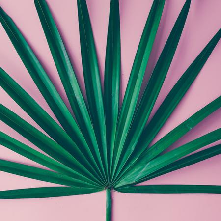 Foglie tropicali su sfondo rosa pastello. Concetto minimo. Piatta piano. Archivio Fotografico - 74236977