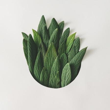 Arreglo mínimo creativo de hojas verdes. Concepto de la naturaleza. Lecho plano.