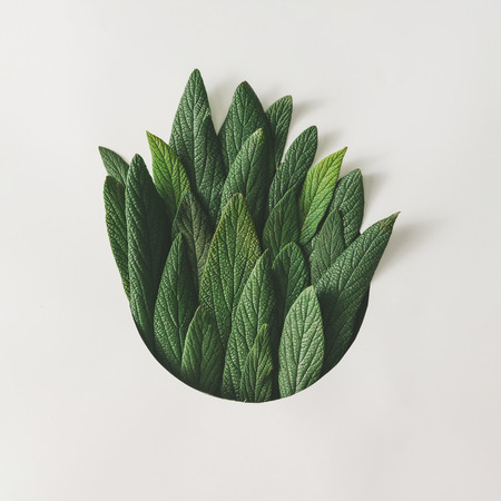Creative minimal arrangement of green leaves. Nature concept. Flat lay. Фото со стока - 76154366