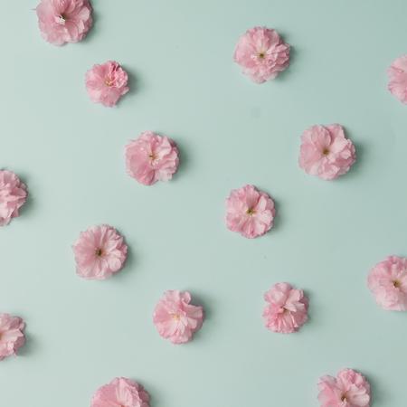 블루 파스텔 배경에 핑크 꽃 패턴입니다. 최소한의 봄 개념입니다. 평평한 평신도. 스톡 콘텐츠