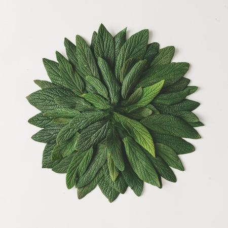 Kreative minimale Anordnung von grünen Blättern . Natur-Konzept . Flach legen Standard-Bild - 76154384