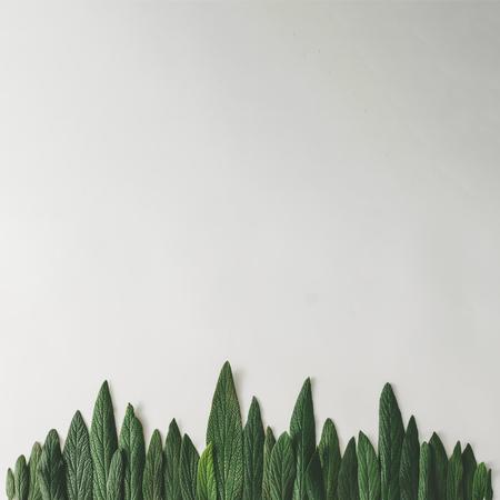 Wald treeline aus grünen Blättern auf hellem Hintergrund gemacht. Minimales Naturkonzept. Flach lag Standard-Bild - 76154383