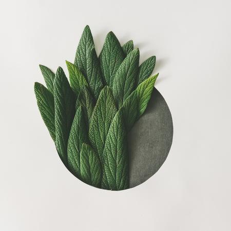 緑の葉の創造的な最小限の配置。性質の概念。フラットが横たわっていた。