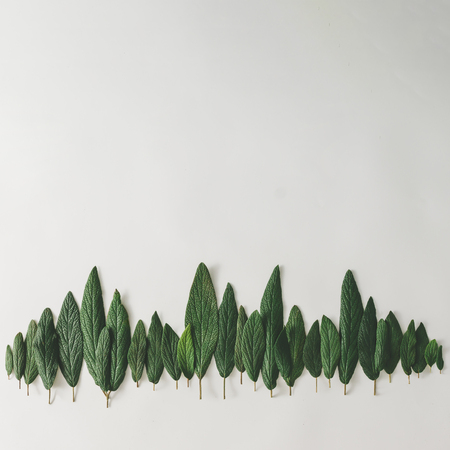 Forest treeline made of green leaves on bright background. Minimal nature concept. Flat lay. Banque d'images