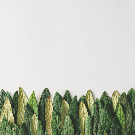 Forest treeline made of green leaves on bright background. Minimal nature concept. Flat lay. Stock Photo