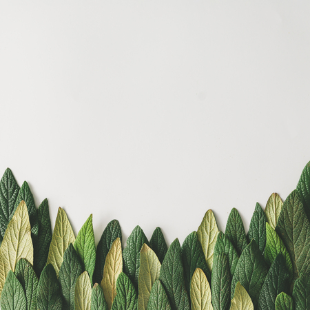Forest treeline made of green leaves on bright background. Minimal nature concept. Flat lay. Standard-Bild