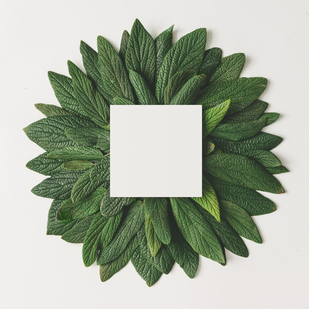 Creative minimal arrangement of green leaves with paper card note. Nature concept. Flat lay.