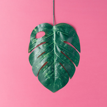 Tropical palm leaves on pink background. Minimal nature summer concept. Flat lay. Stock Photo