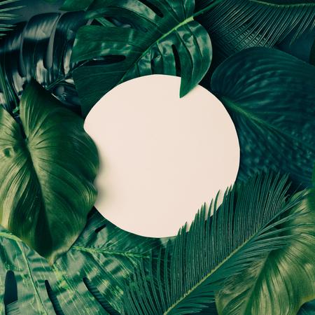 크리 에이 티브 열 대 녹색 복사본 공간 레이아웃을 나뭇잎. 자연 봄 개념입니다. 평평한 평신도.