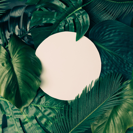 Creative tropical green leaves layout with copy space. Nature spring concept. Flat lay. Banque d'images