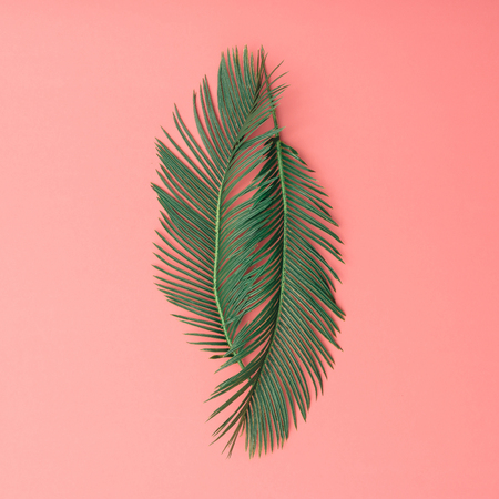 Tropical palm leaves on pink background. Minimal nature summer concept. Flat lay. Standard-Bild
