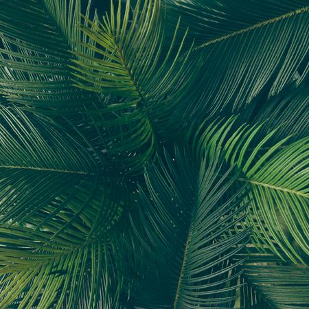 Disegno di foglie verdi tropicali creativi. Concetto di primavera della natura. Pianta piatta. Archivio Fotografico - 76156387
