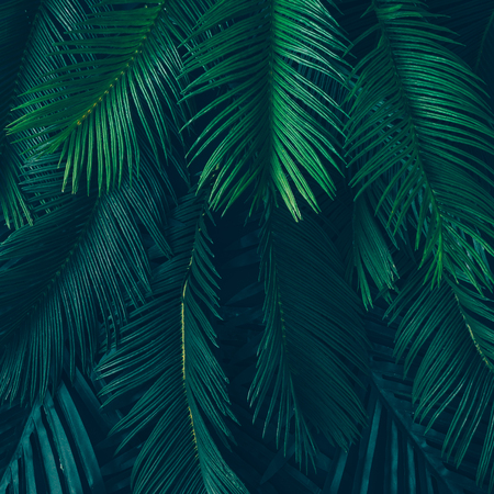Creative nature layout made of tropical leaves and flowers. Flat lay. Summer concept. Imagens - 76186297