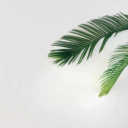Tropical palm leaves on bright background. Summer minimal concept. Flat lay.