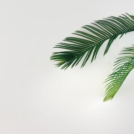 Tropische palmbladeren op lichte achtergrond. Zomer minimal concept. Vlak liggen.