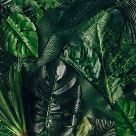 Creatieve natuuruitleg gemaakt van tropische bladeren en bloemen. Vlak liggen. Zomerconcept.
