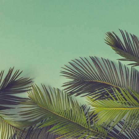크리 에이 티브 자연 레이아웃 열 대 잎과 하늘 파란색 배경에 꽃의했다. 평평한 평신도. 여름 개념입니다.
