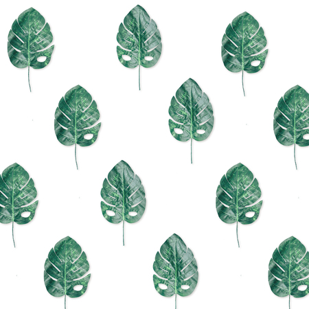 Bright wallpaper pattern made of tropical swiss cheese leaves.