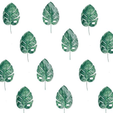 Modèle de papier peint lumineux composé de feuilles de fromage suisse tropicales.