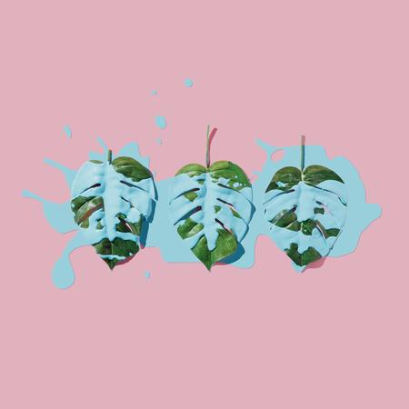 Vernice blu splatter su foglie tropicali su sfondo pastello rosa. pianeggiante. Minimo concetto. Archivio Fotografico