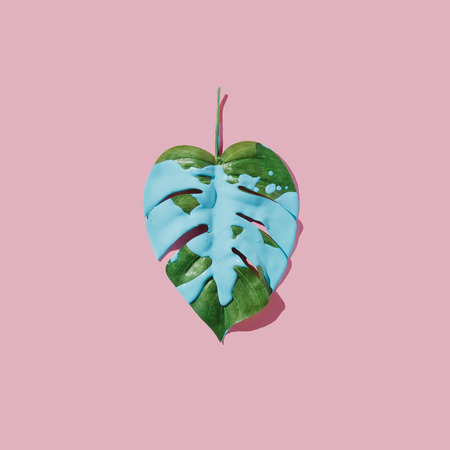 Blue paint splatter over tropical leaf on pink pastel background. flat lay. Minimal concept. Stock Photo