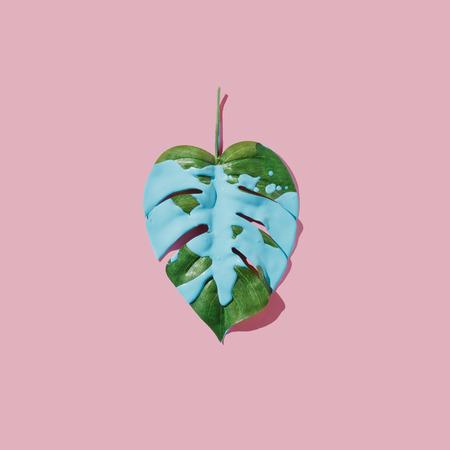 Vernice blu splatter su foglia tropicale su sfondo pastello rosa. pianeggiante. Minimo concetto. Archivio Fotografico