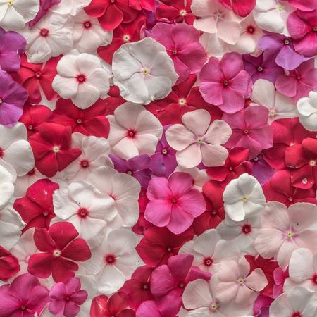 Disposition de motif créatif en fleurs variées. Flat lay. Contexte de la nature