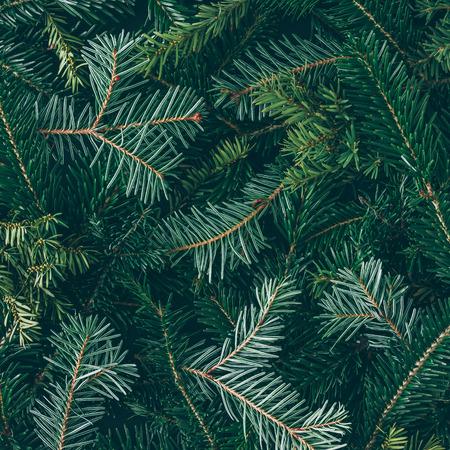 Kreativní rozložení větví vánočních stromků. Ploché leželo. Příroda Nový rok koncepce.