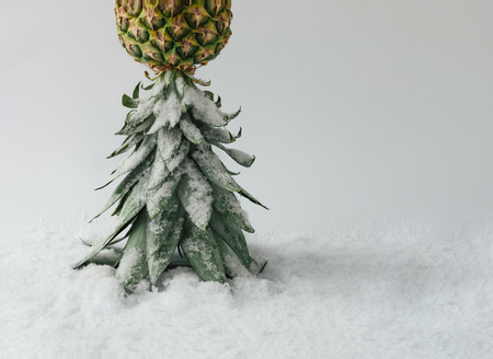Зимний пейзаж из ананаса и снега. Рождественская концепция. Фото со стока
