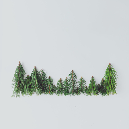 Evergreen pine forest treeline made of tree branches.