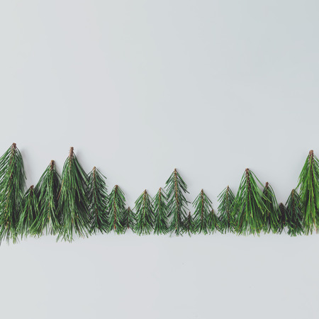 Evergreen pine forest treeline made of tree branches. Minimal nature concept. Flat lay.