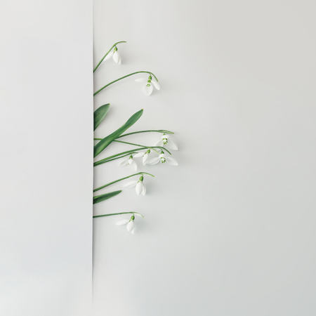 Creative layout made with snowdrop flowers on bright background. Flat lay. Spring minimal concept.