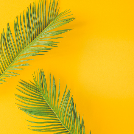Green tropical palm leaves on bright yellow background. Minimal summer concept. Creative flat lay. Banque d'images