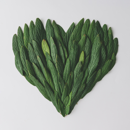 Heart shape made of green leaves. Flat lay. Nature spring concept.