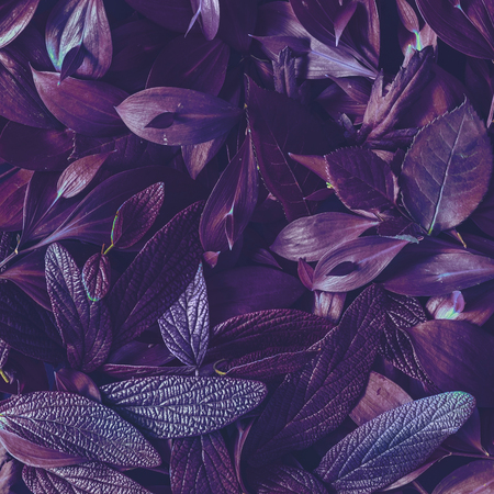 Creative tropic purple leaves layout. Supernatural concept. Flat lay. Ultra violet colors. 스톡 콘텐츠