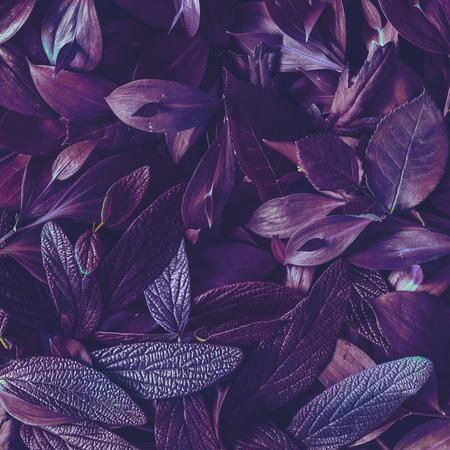 Creative tropic purple leaves layout. Supernatural concept. Flat lay. Ultra violet colors. Archivio Fotografico
